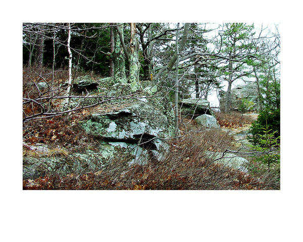Kaaterskill Clove Photograph - Another Cat In The Catskills Motif by Terrance DePietro