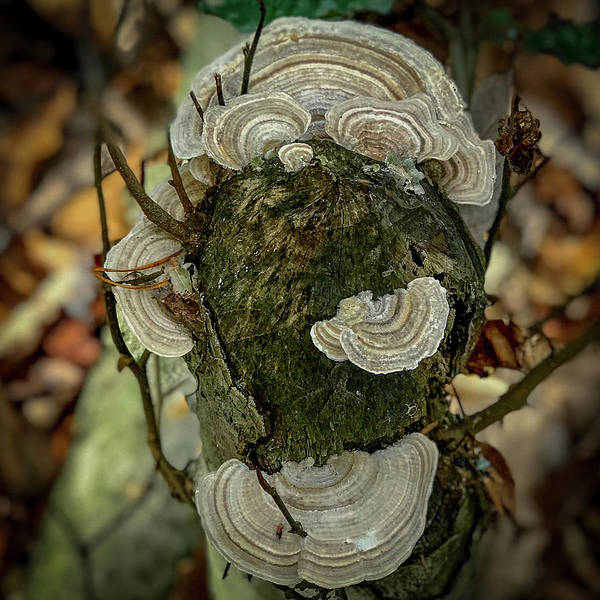 Photograph - Another Fungus by Lora J Wilson