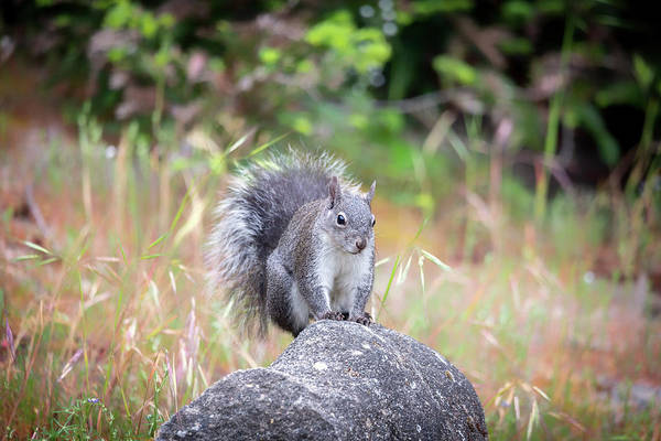 Wall Art - Photograph - Another Squirrel Portrait by Marnie Patchett