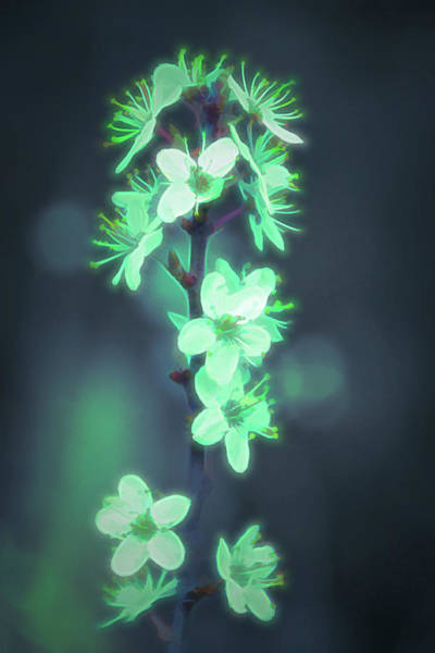 Photograph - Another World - Glowing Flowers by Scott Lyons