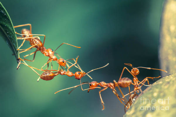 Wall Art - Photograph - Ant Bridge Unity by Chik 77