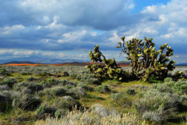 Photograph - Antelope Acres Overlook by Glenn McCarthy Art and Photography