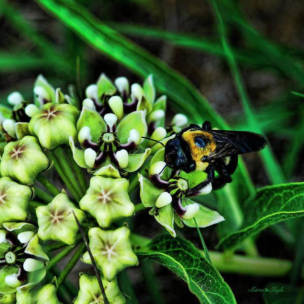 Photograph - Antelope Horns And Bumblebee by Karen Slagle