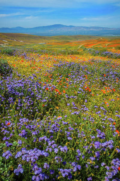 Photograph - Antelope Valley Superbloom 2019 - Vertical by Lynn Bauer