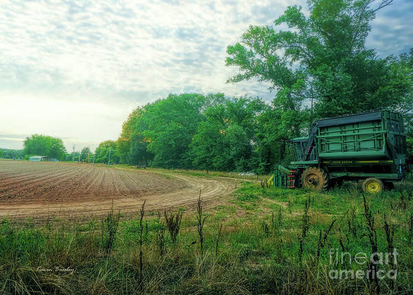 Wall Art - Photograph - Anticipating Harvest by Karen Beasley