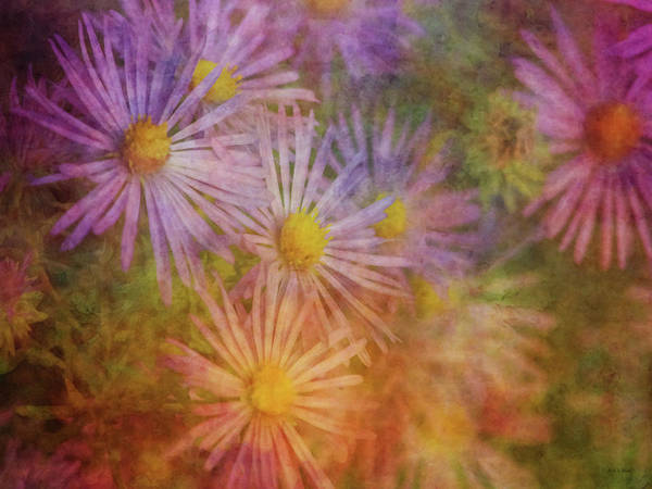Photograph - Anticipation 5744 Idp_2 by Steven Ward