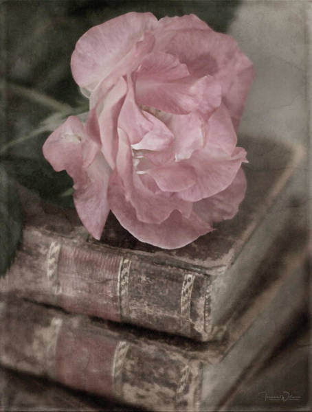 Photograph - Antique Pink By Tl Wilson Photography  by Teresa Wilson