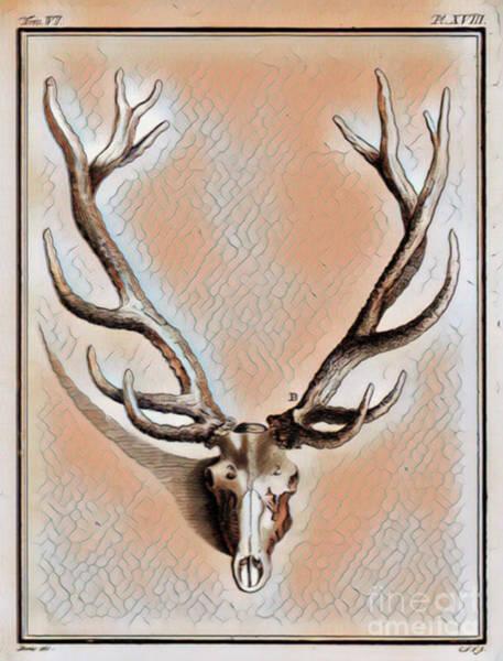 Deer Skull Digital Art - Antlers And Skull by Jackie MacNair