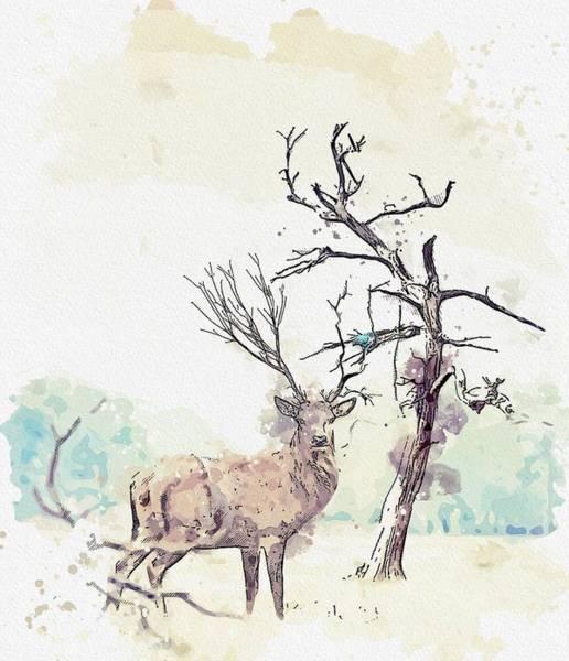 Black Buck Painting - antlers -  watercolor by Adam Asar by Adam Asar
