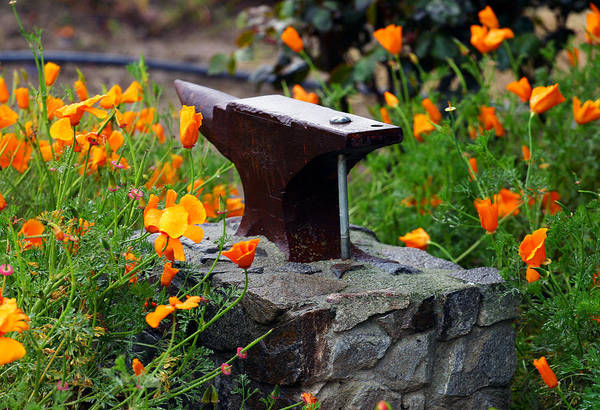 Anvil In The Poppies Art Print