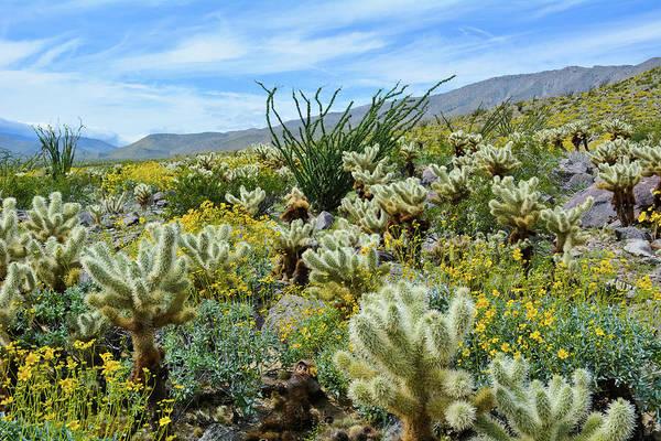 Photograph - Anza Borrego Cactus Garden Landscape by Kyle Hanson