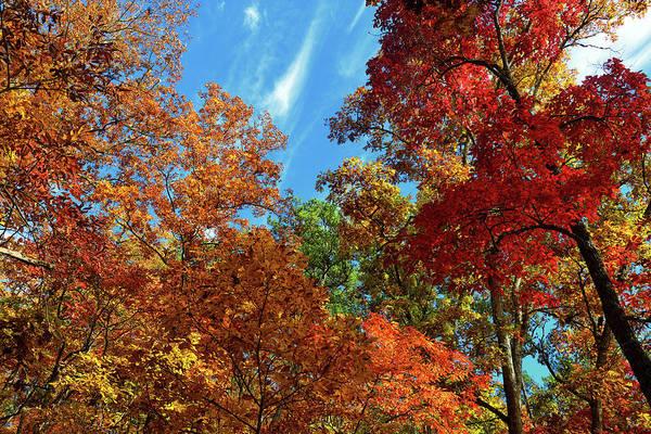 Photograph - Appalachian Autumn Canopy by Greg Norrell