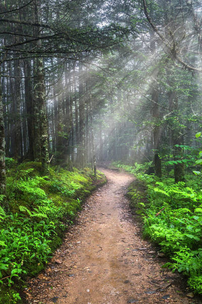 Photograph - Appalachian Trail By Mount Leconte by Debra and Dave Vanderlaan