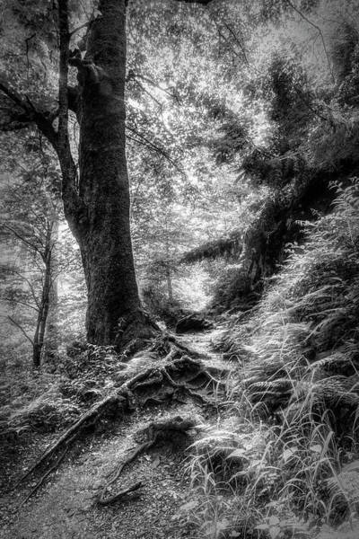 Photograph - Appalachian Trail In Black And White  by Debra and Dave Vanderlaan