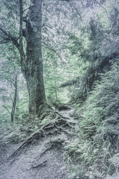 Photograph - Appalachian Trail In Cool Gray Tones by Debra and Dave Vanderlaan