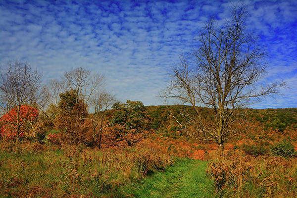 Photograph - Appalachian Trail Massachusetts In The Fall by Raymond Salani III