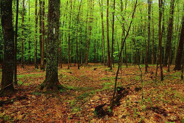Photograph - Appalachian Trail New Hampshire by Raymond Salani III