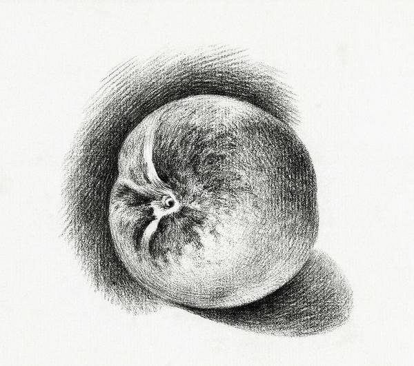 Wall Art - Painting - Apple  1812  By Jean Bernard  1775-1883  by Jean Bernard