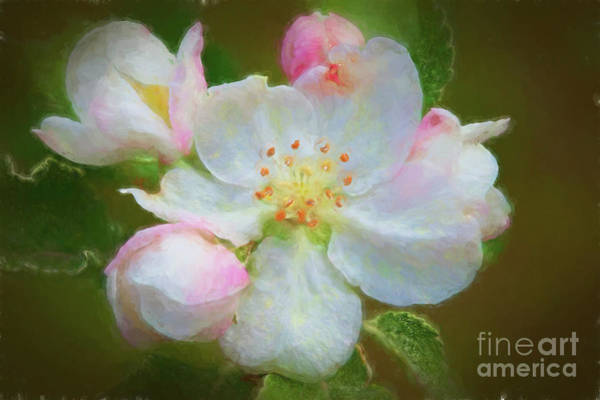Wall Art - Digital Art - Apple Blossom 4387fstgtiti by Doug Berry