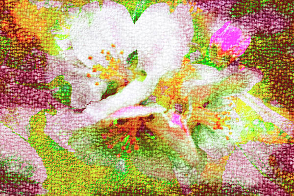 Photograph - Apple Blossom by Nigel Dudson