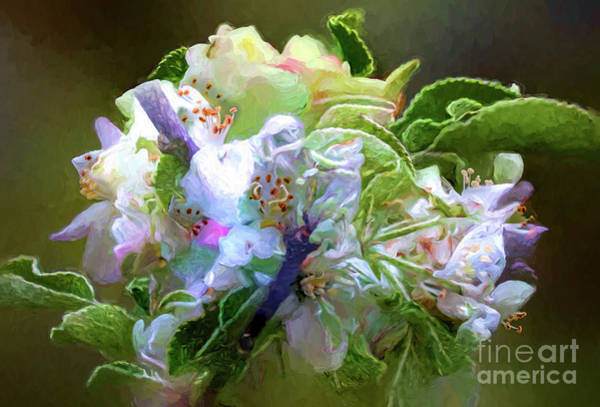 Wall Art - Digital Art - Apple Blossoms 4553fst by Doug Berry