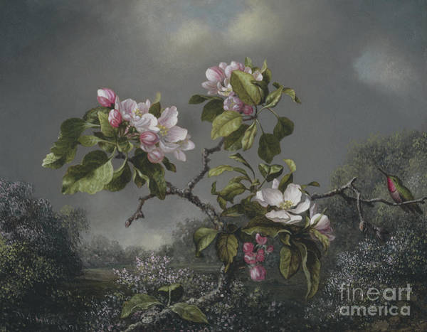 Painting - Apple Blossoms And Hummingbird, 1871 by Martin Johnson Heade