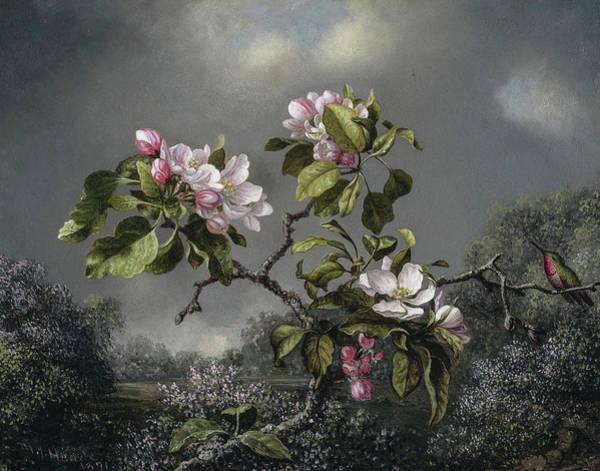 Wall Art - Painting - Apple Blossoms And Hummingbird, Circa 1871 by Martin Johnson Heade