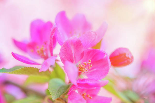 Wall Art - Photograph - Apple Blossoms Colorful Glow by Leland D Howard
