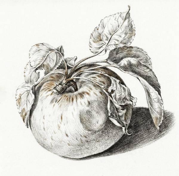 Wall Art - Painting - Apple By Jean Bernard  1775-1883  by Jean Bernard