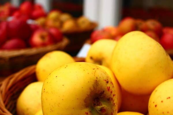 Wall Art - Photograph - Apple Harvest by Loretta S