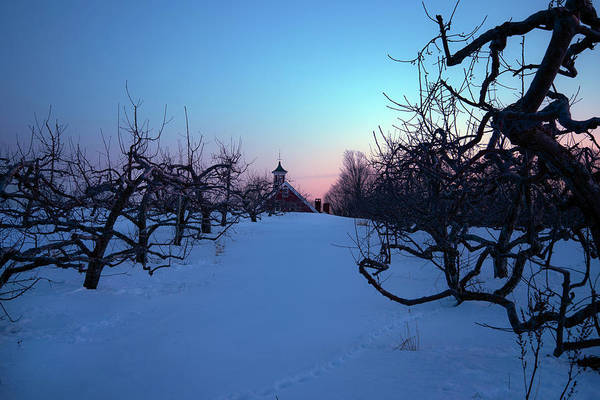 Wall Art - Photograph - Apple Orchard Winter Sunset by Joann Vitali
