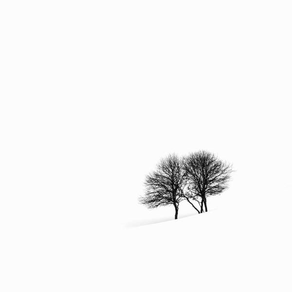 Photograph - Apple Trees In A Snowy Landscape by Jeremy Woodhouse