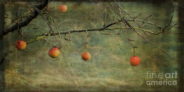 Digital Art - Apples In December by Liz Alderdice