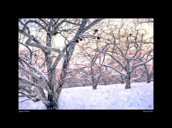 Photograph - Apples In Winter Fine Art Poster by Wayne King