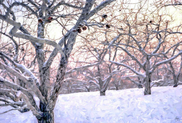 Photograph - Apples In Winter by Wayne King