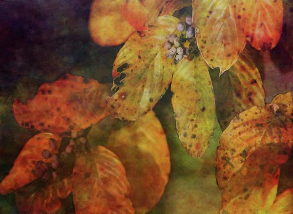 Photograph - Approaching Amber 5717 Idp_2 by Steven Ward