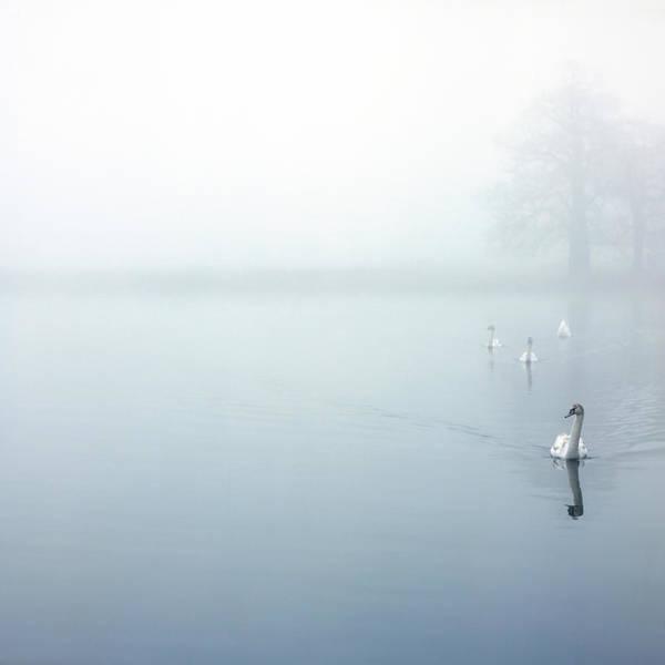 Wall Art - Photograph - Approaching Swans Xl by Beholdingeye