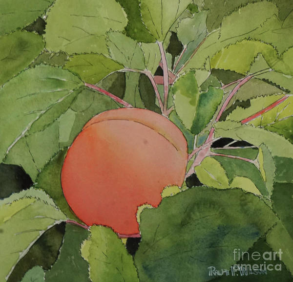 Painting - Apricot In Situ by Ralph F Wilson