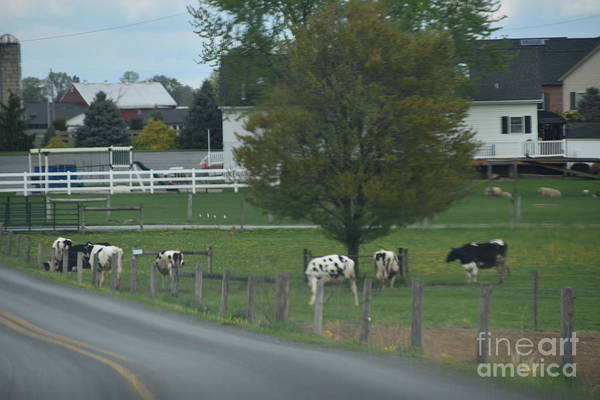 Photograph - April Afternoon For Cows by Christine Clark