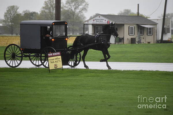 Photograph - April Buggy Commute Home by Christine Clark