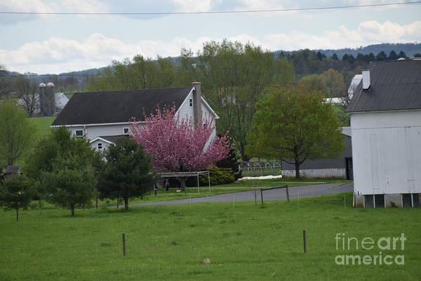 Photograph - April Farmstead View by Christine Clark