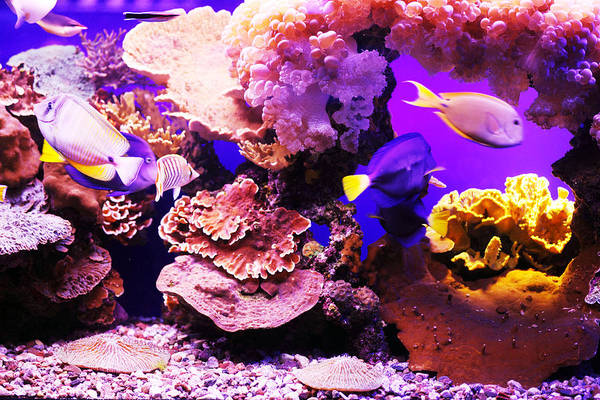 Fish Tank Photograph - Aquarium Fish by Skynesher