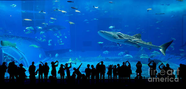 Show Photograph - Aquarium In Okinawa by Leungchopan
