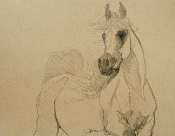 Drawing - Arabian Stallion by Jani Freimann