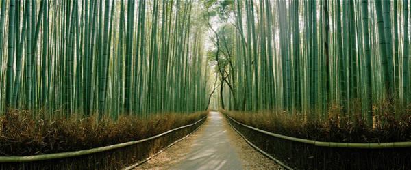 Wall Art - Photograph - Arashiyama Bamboo Forest, Kyoto by Panoramic Images
