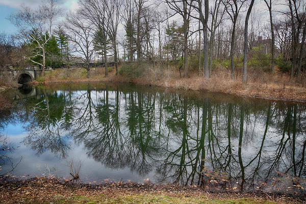 Photograph - Arbor Reflections by Cate Franklyn