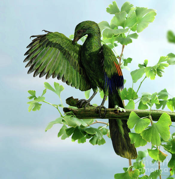Photograph - Archaeopteryx Preening by Warren Photographic