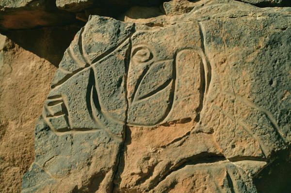 Art Object Photograph - Archeological Rock Carving, Cow by Friedrich Schmidt