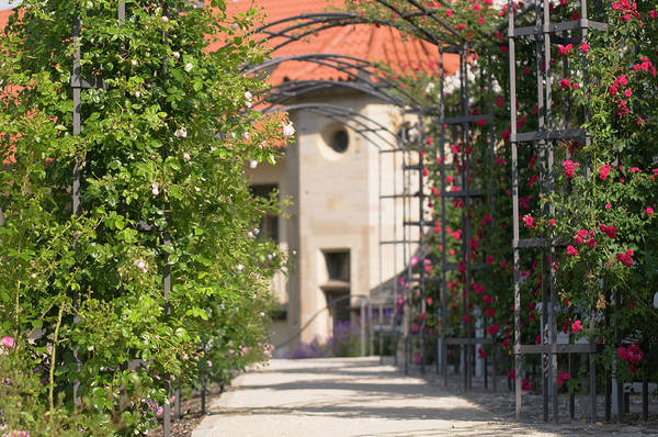 Photograph - Archway Through Rose Garden 2 by Jenny Rainbow