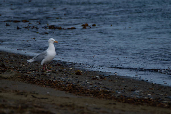 Photograph - Arctic Bird by Kai Mueller